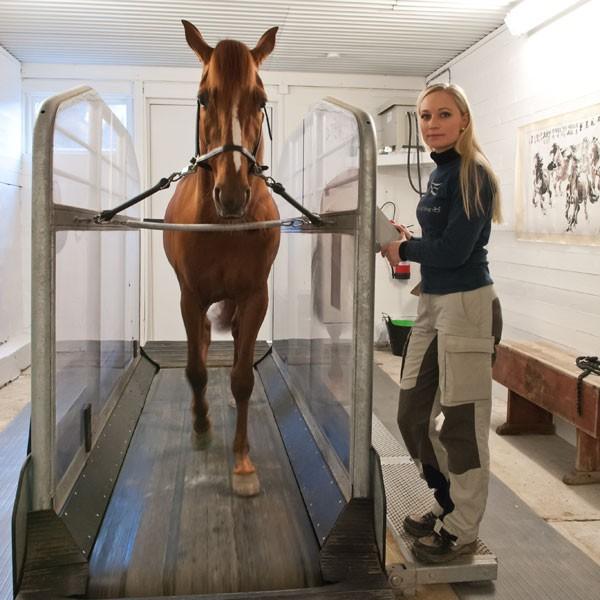 Rehabilitering av hest